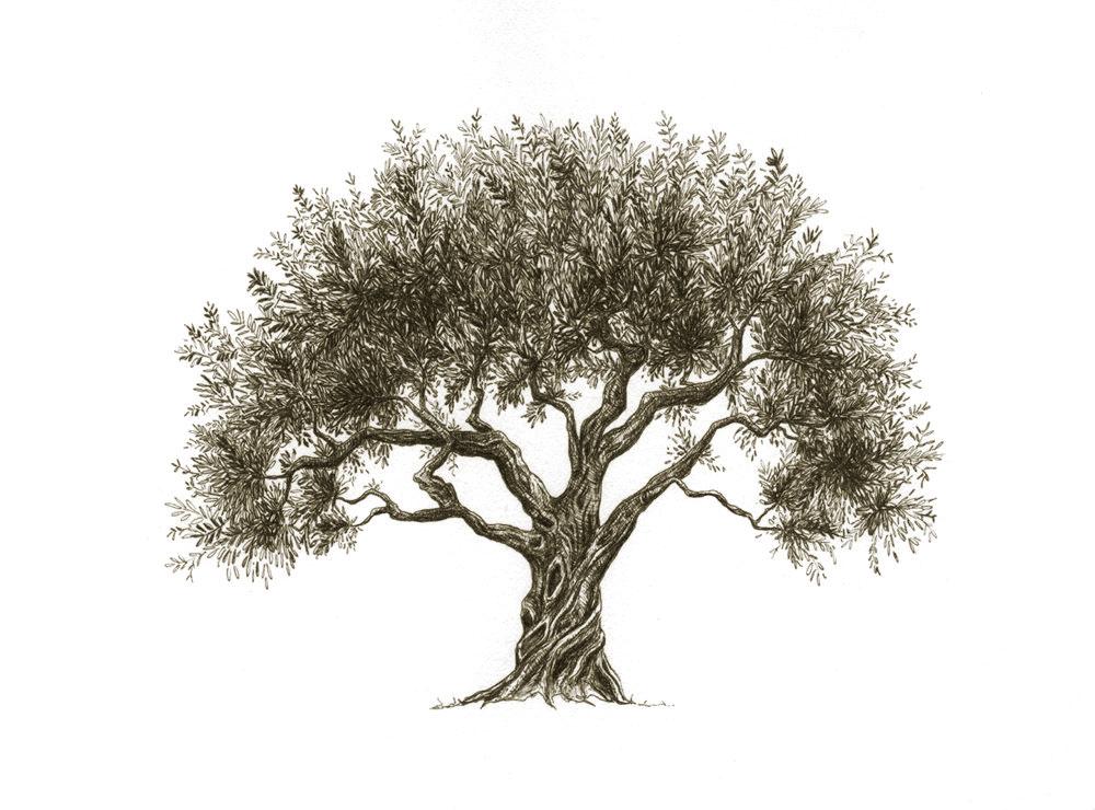 olive_trre_antique