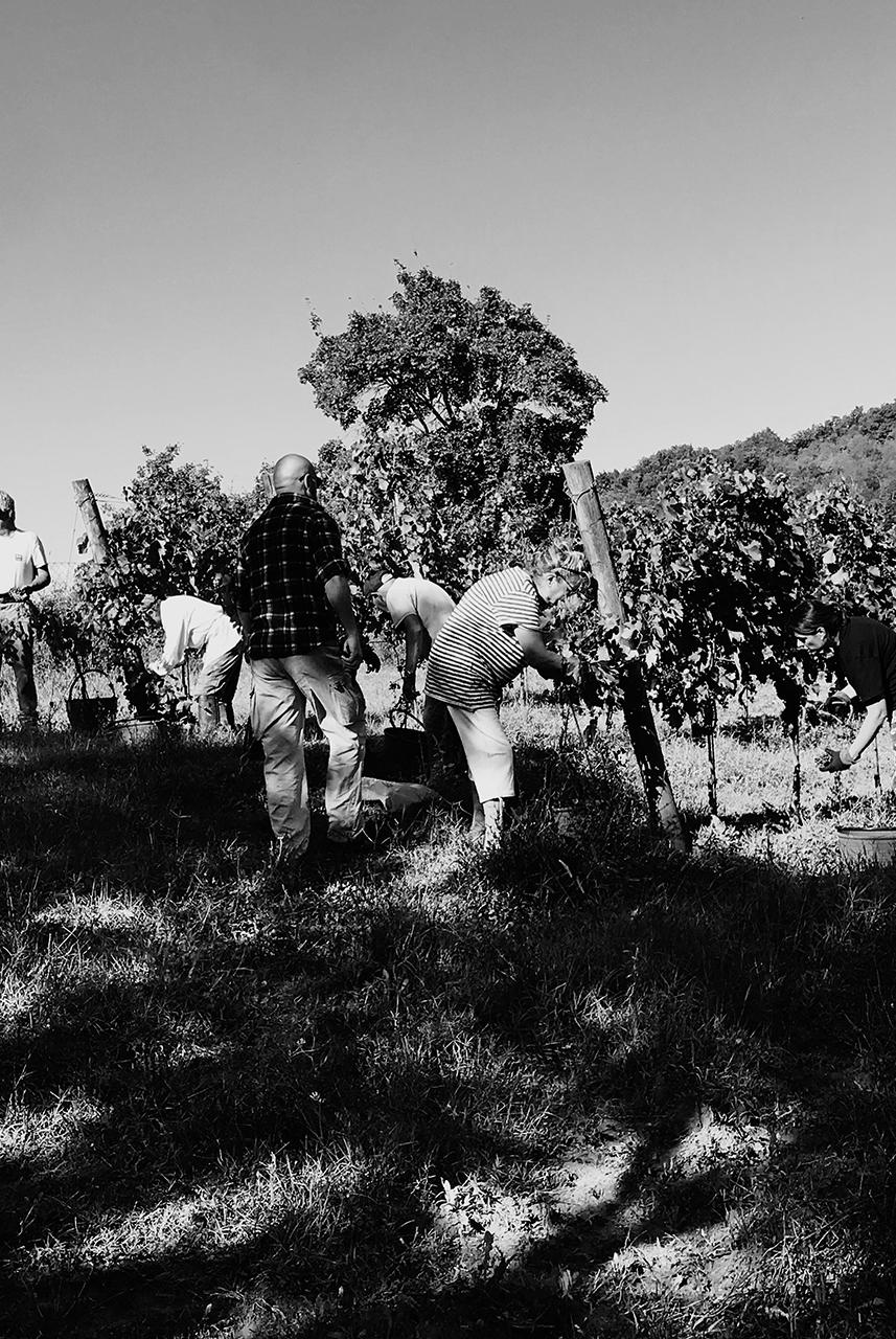 vino_biologico_i_sergenti_reggello_firenze